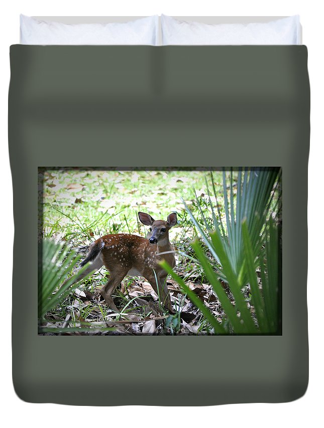 Animals Duvet Cover featuring the photograph Cumberland Island Deer by Debra White
