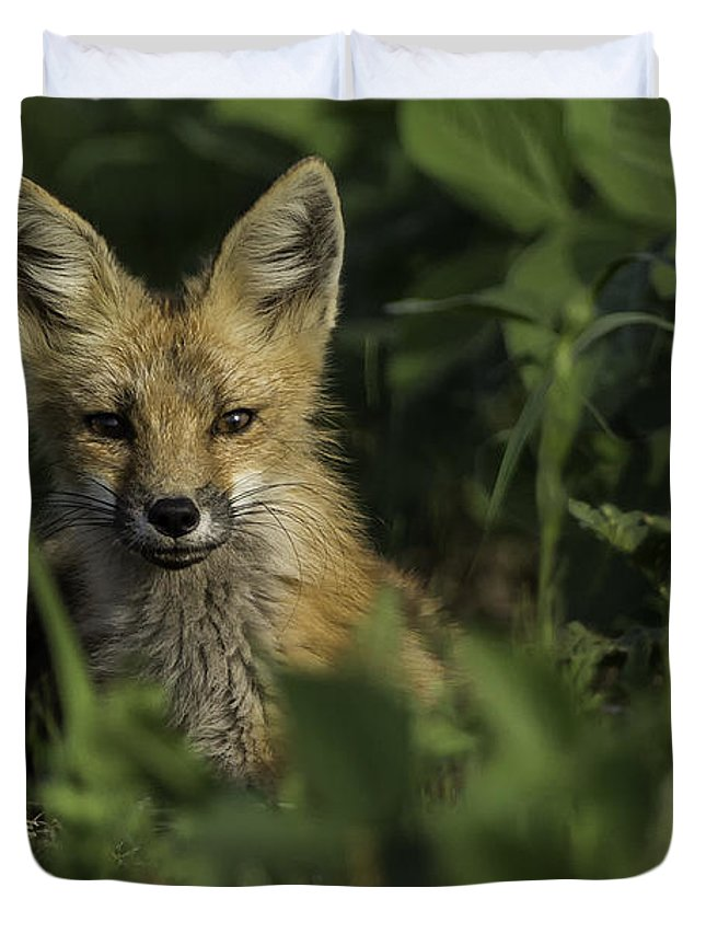 Red Fox Duvet Cover featuring the photograph Curiosity by Everet Regal