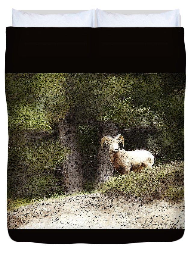 Wildlife Duvet Cover featuring the photograph Curiosity by Jo-Anne Gazo-McKim