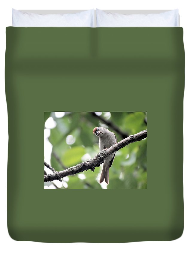 Bird Duvet Cover featuring the photograph Curiosity by Theresa Campbell