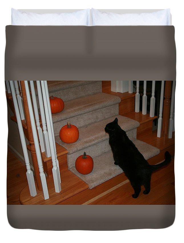 Black Cat Duvet Cover featuring the photograph Curious Black Cat by Brad Nellis