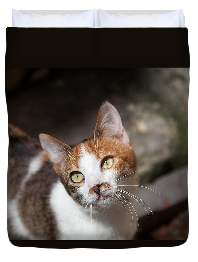 Cat Duvet Cover featuring the photograph Curious Cat by Lana Hamilton