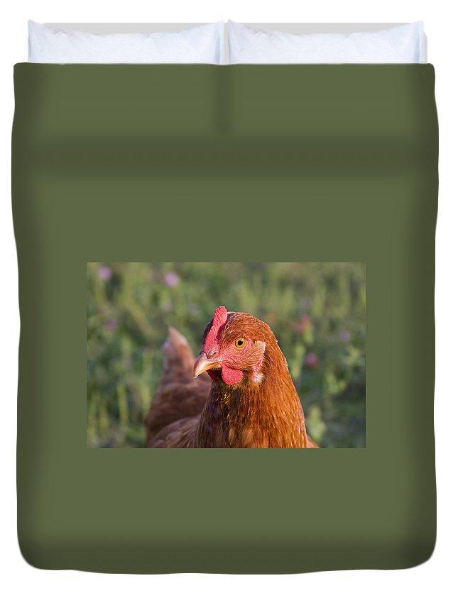 Chicken Curious Brown Red Green Grass Farm Rural Duvet Cover featuring the photograph Curious Chicken by Andrei Shliakhau