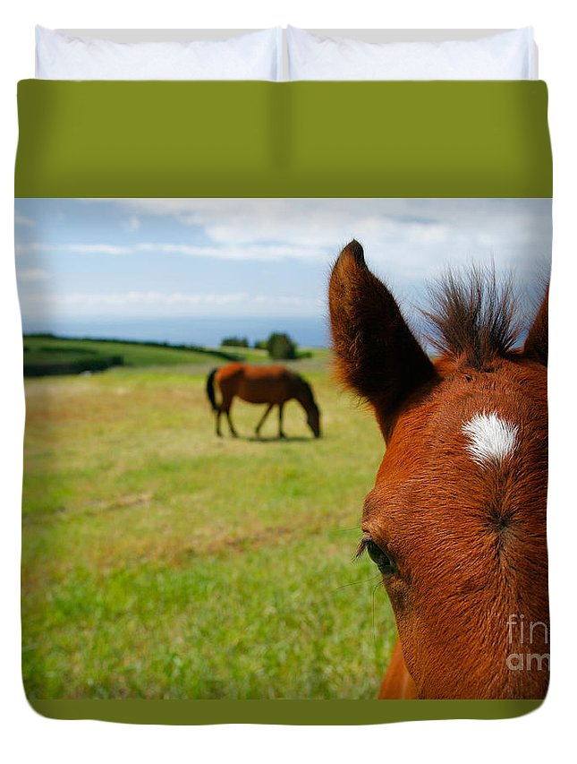 Farm Duvet Cover featuring the photograph Curious Colt by Gaspar Avila
