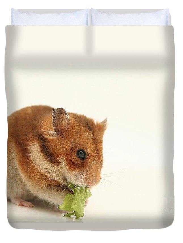 Hamster Duvet Cover featuring the photograph Curious Hamster by Yedidya yos mizrachi