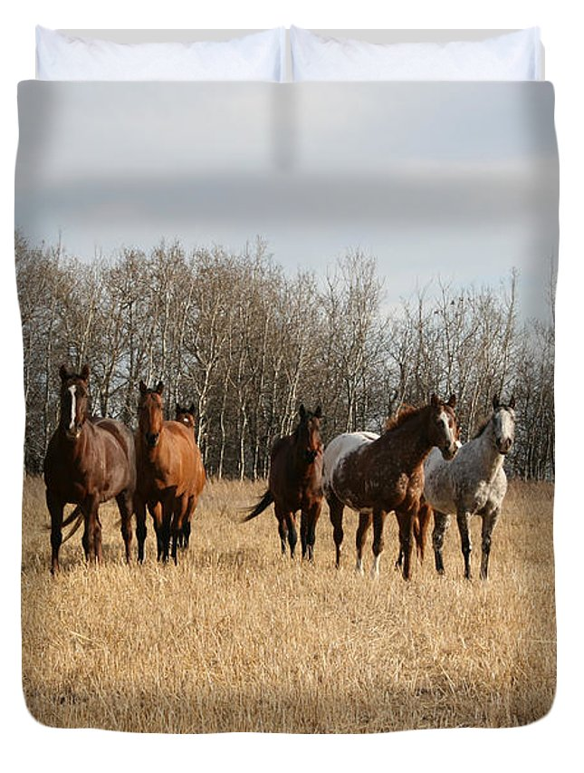 Horses Herd Animals Ranch Cowboy Appaloosa Quarter Horse Mares Pasture Field Grass Duvet Cover featuring the photograph Curious Horses by Andrea Lawrence