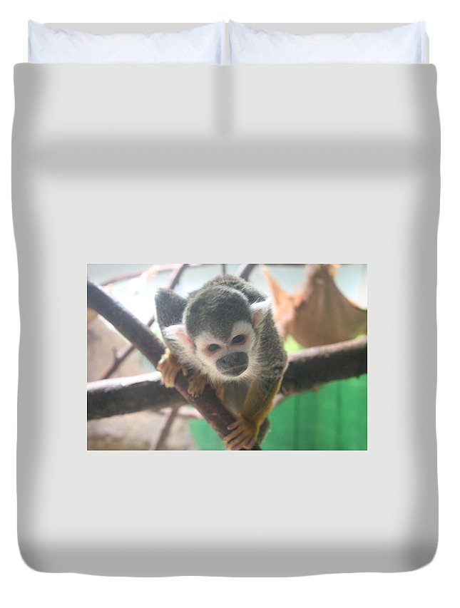 Monkey Duvet Cover featuring the photograph Curious Monkey by Lynn Michelle