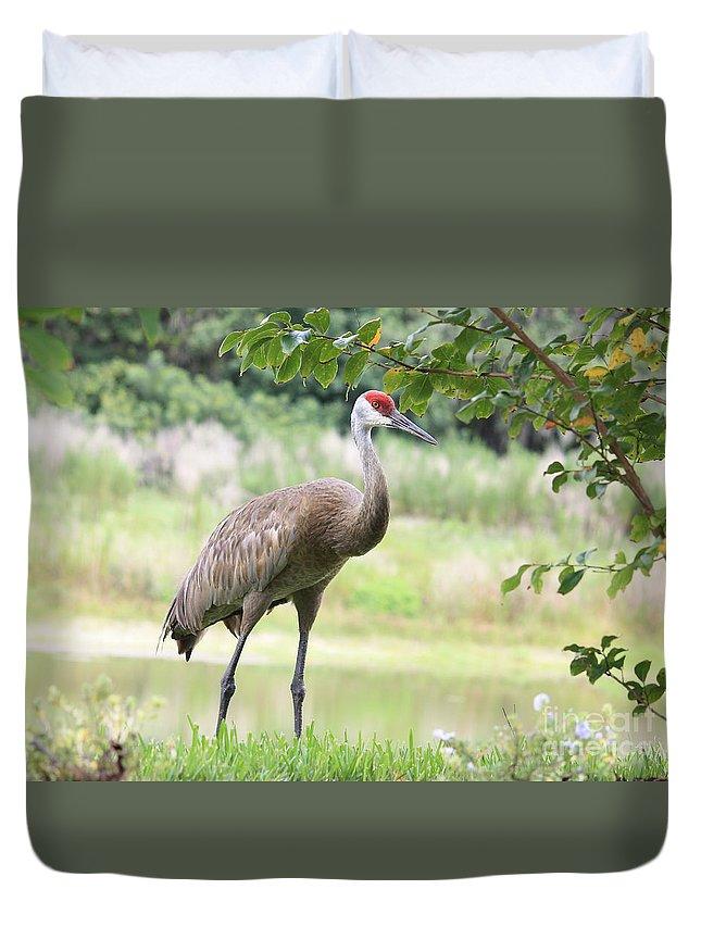 Sandhill Duvet Cover featuring the photograph Curious Sandhill Crane by Carol Groenen