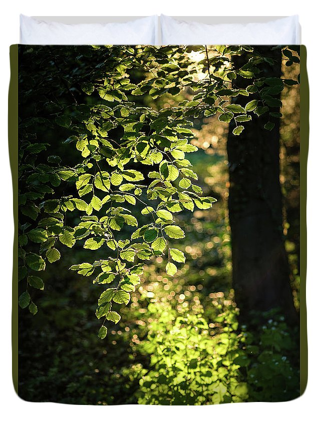 Curtain Duvet Cover featuring the photograph Curtain Of Leaves by Daniel Heine