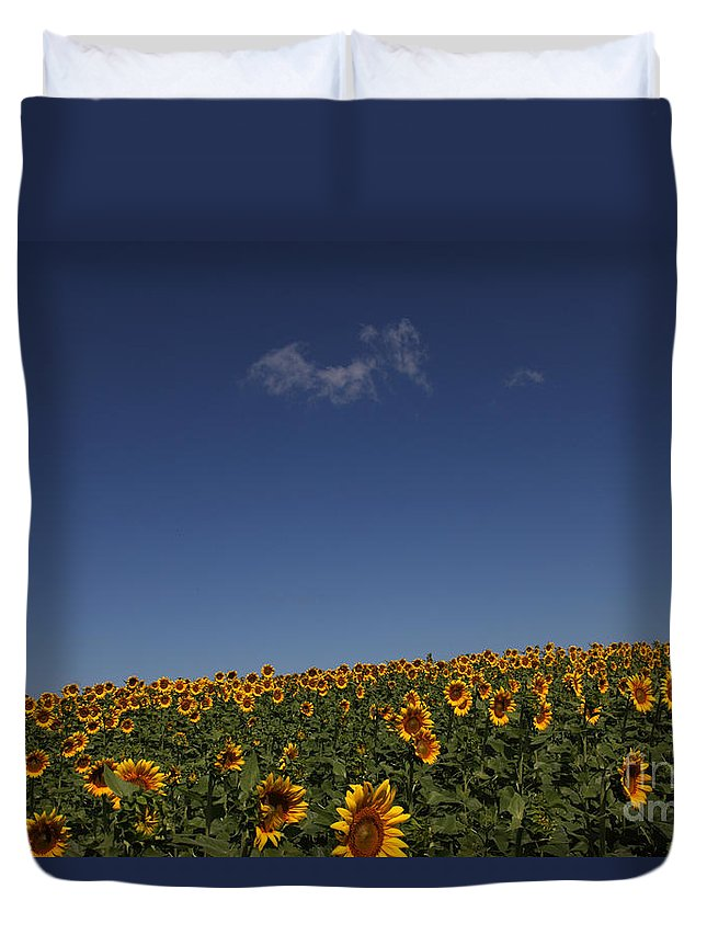 Sunflowers Duvet Cover featuring the photograph Curvature by Amanda Barcon