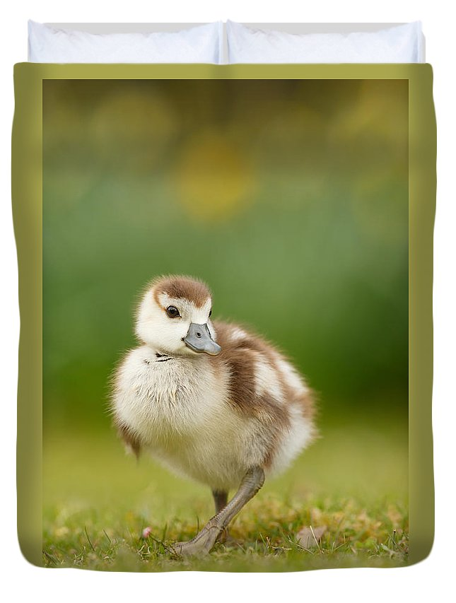 Gosling Duvet Cover featuring the photograph Cute Gosling by Roeselien Raimond