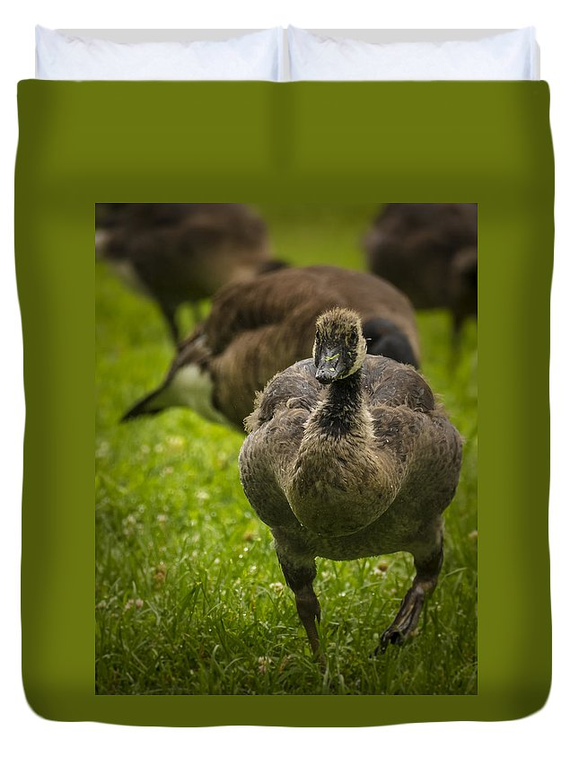 Goose Duvet Cover featuring the photograph Cute On The Move by Jorge Perez - BlueBeardImagery