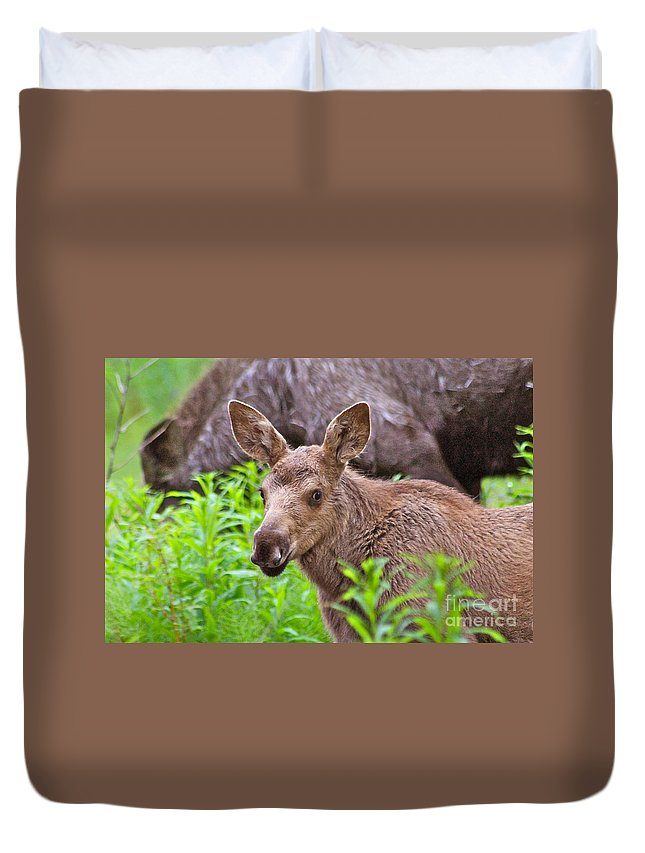Moose Duvet Cover featuring the photograph Cute by Rick Monyahan