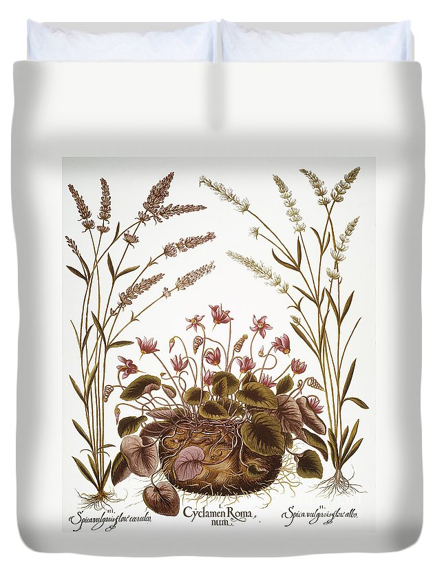 1613 Duvet Cover featuring the photograph Cyclamen & Lavender, 1613 by Granger