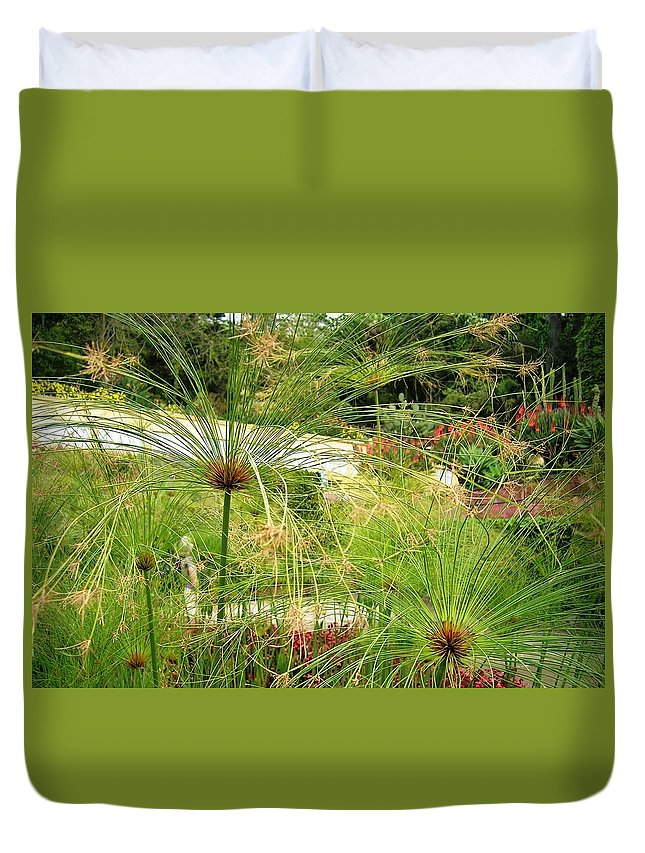 Landscape Duvet Cover featuring the photograph Cyperus Papyrus - Bulrush by Valerie Ornstein