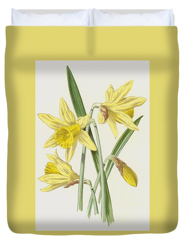 Daffodil Duvet Cover featuring the painting Daffodil by Frederick Edward Hulme