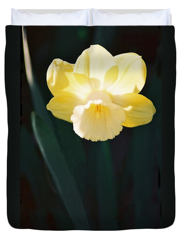 Daffodil Duvet Cover featuring the photograph Daffodil by Steve Karol