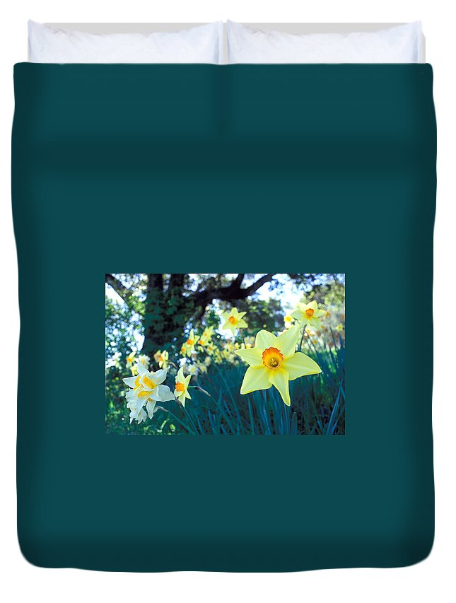 Daffodils Duvet Cover featuring the photograph Daffodils And The Oak 2 by Kathy Yates
