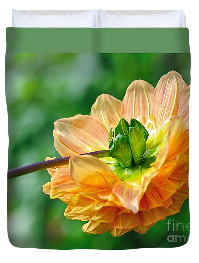 Photography Duvet Cover featuring the photograph Dahlia Resting by Kaye Menner