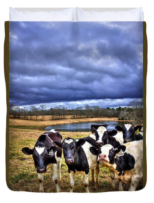 Reid Callaway Dairy Heifer Groupies 2 Duvet Cover featuring the photograph Dairy Heifer Groupies Future Chick-fil-a Starrs by Reid Callaway