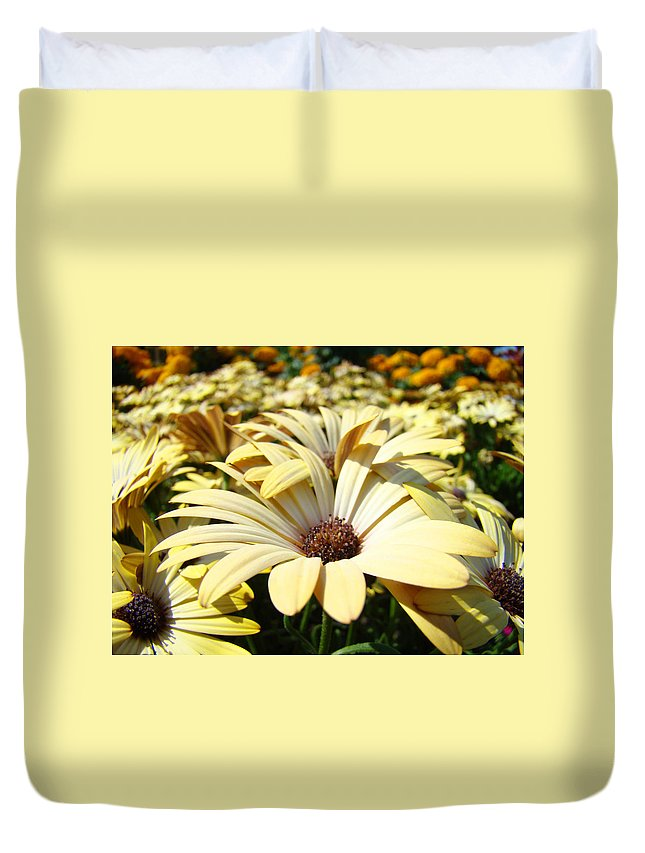 Daisy Duvet Cover featuring the photograph Daisies Flowers Landscape Art Prints Daisy Floral Baslee Troutman by Baslee Troutman