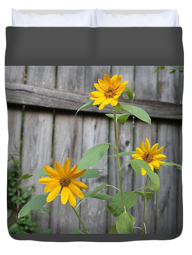 Flowers Duvet Cover featuring the photograph Daisies On The Fence by Cheryl Kostanesky