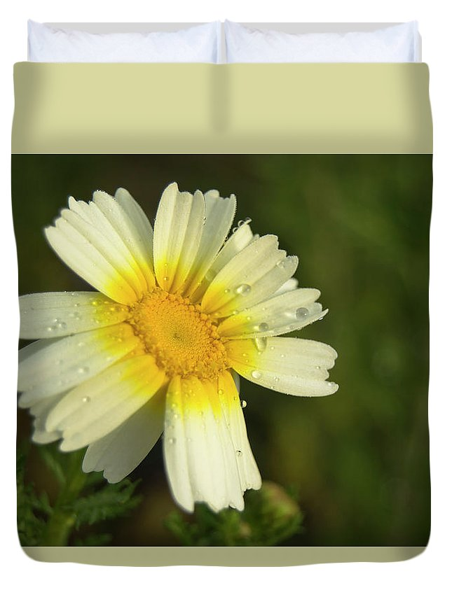 Daisy Duvet Cover featuring the photograph Daisy #5 by Ignacio Leal Orozco