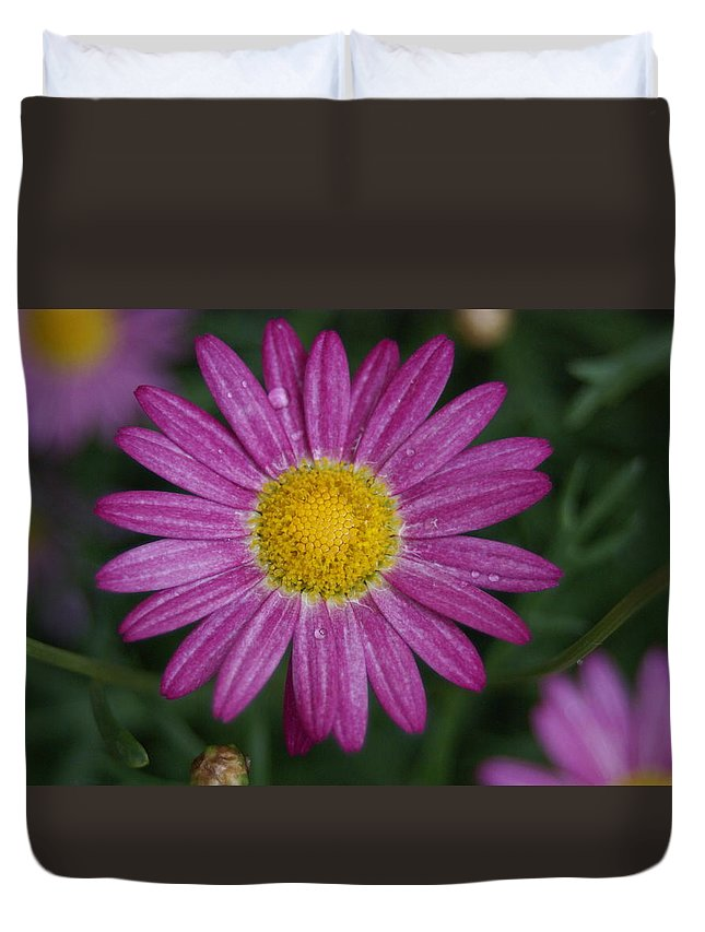 Flower Duvet Cover featuring the photograph Daisy by Heidi Poulin