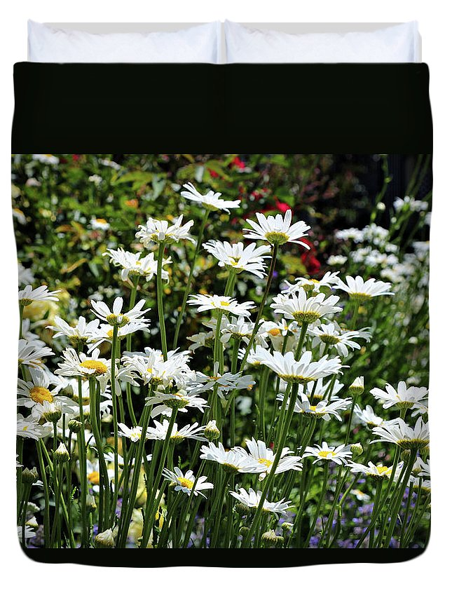White Daisy's Duvet Cover featuring the photograph Daisy by Rosalyn Zacha