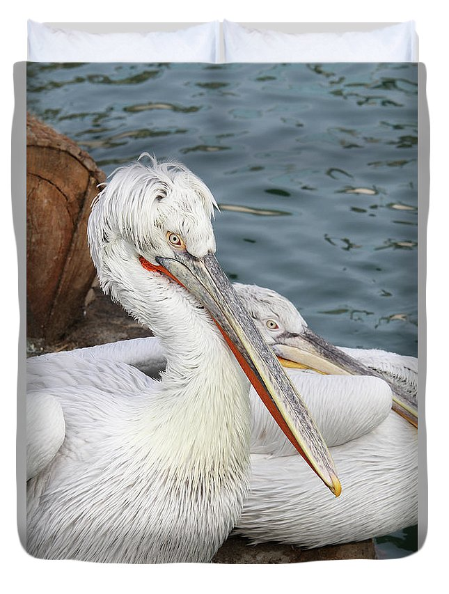 Pelican Duvet Cover featuring the photograph Dalmatian Pelican #3 by Judy Whitton