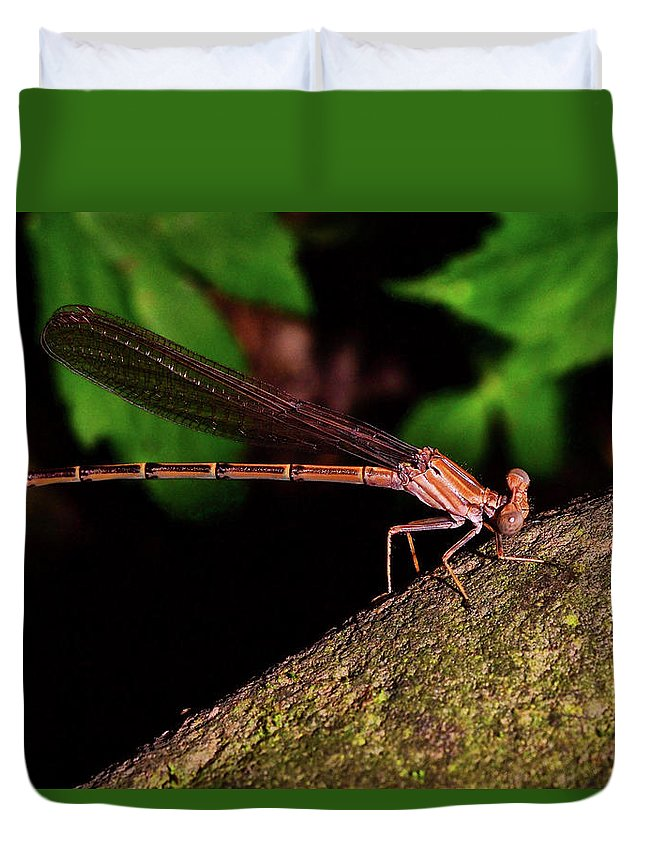 Macro Duvet Cover featuring the photograph Damselfly 006 by George Bostian