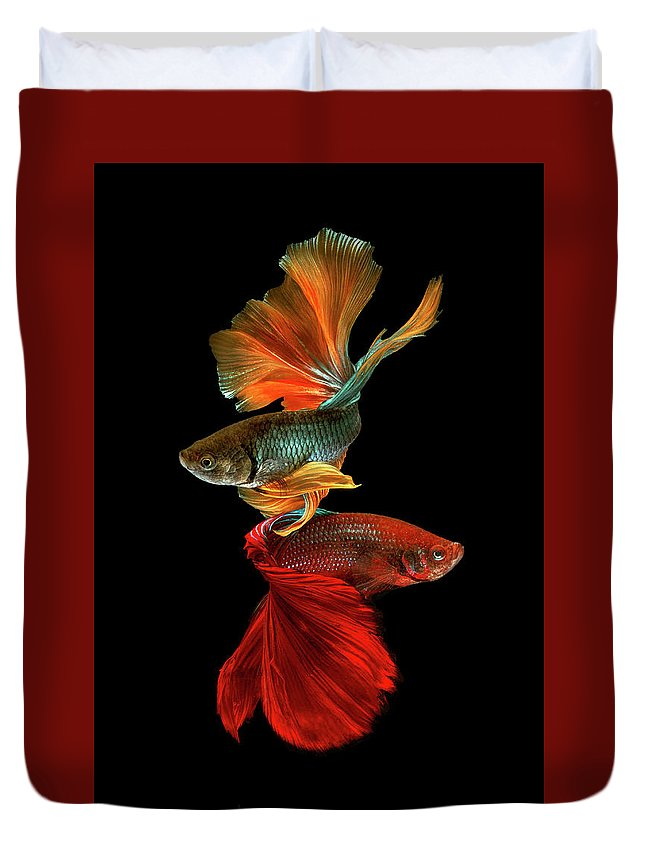 Fighting Fish Duvet Cover featuring the photograph Dance by Ganjar Rahayu