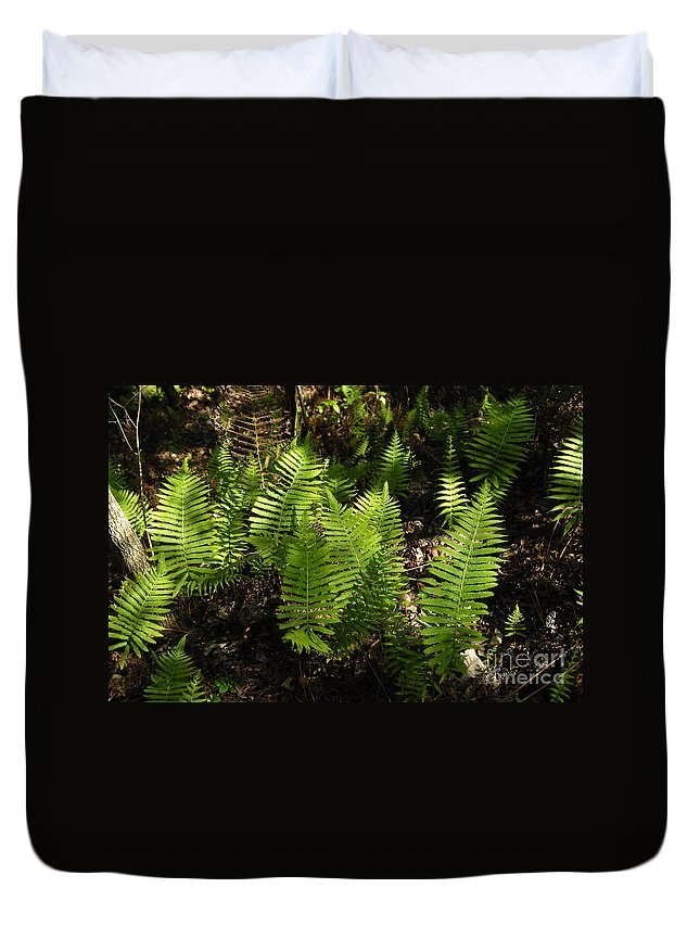 Ferns Duvet Cover featuring the photograph Dancing Ferns by David Lee Thompson