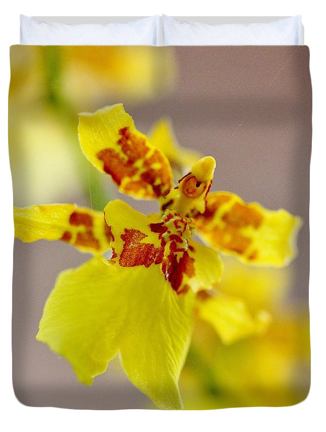 Oncidium Orchid Duvet Cover featuring the photograph Dancing Lady Orchid by Mesa Teresita