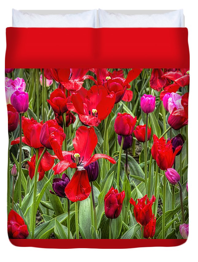 Spring Duvet Cover featuring the photograph Dancing Tulips by Nadia Sanowar