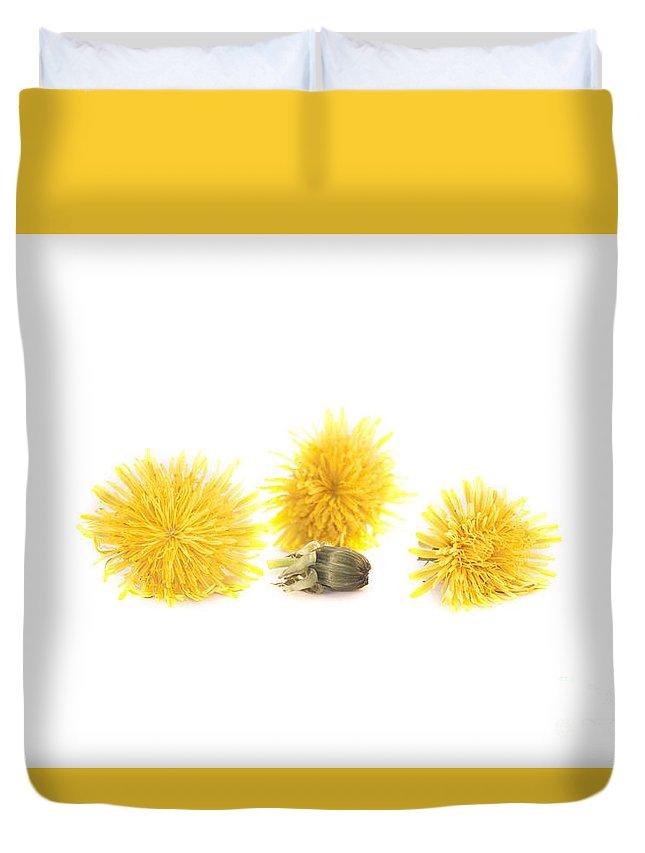 Dandelion Duvet Cover featuring the photograph Dandelion by D R