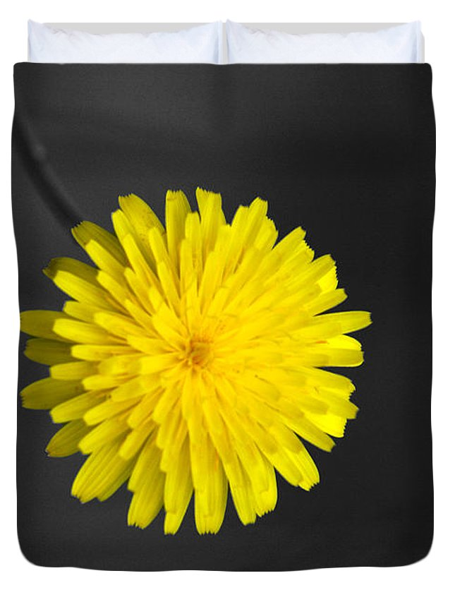 Floral Duvet Cover featuring the photograph Dandelion by Holly Kempe