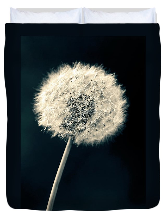 Closeup Duvet Cover featuring the photograph Dandelion by U Schade