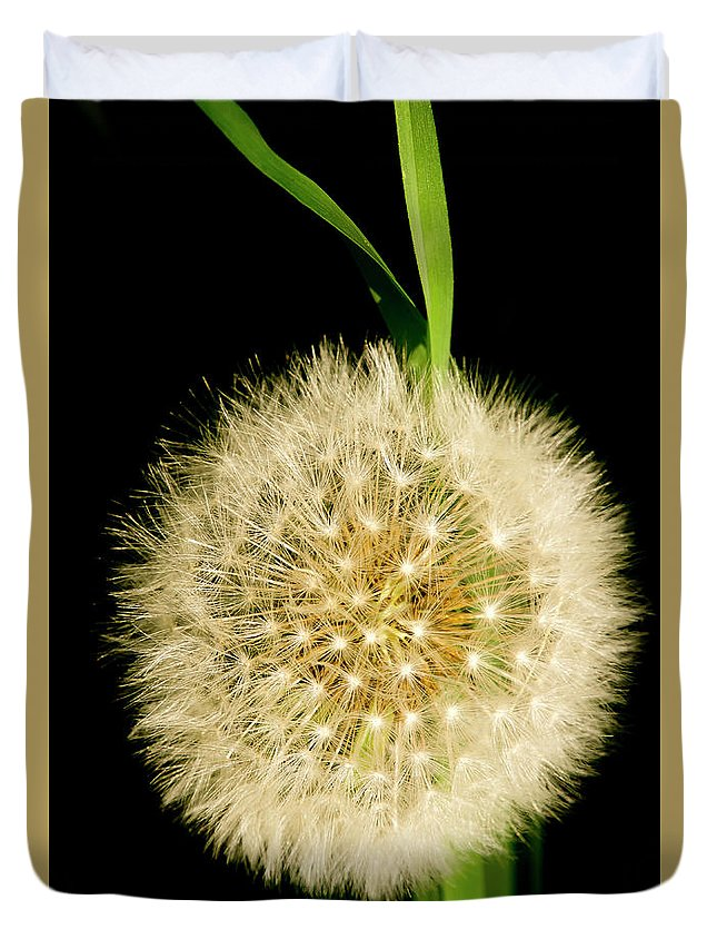 Floral Duvet Cover featuring the photograph Dandelion's Seed Head. by Elena Perelman