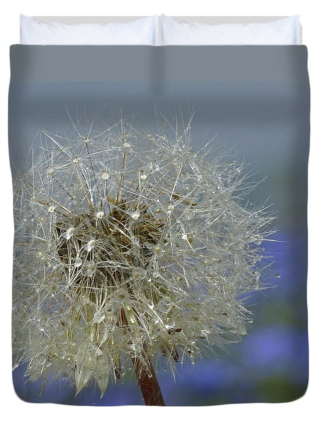 Dandelion Duvet Cover featuring the photograph Dandy Lion by Heather Coen