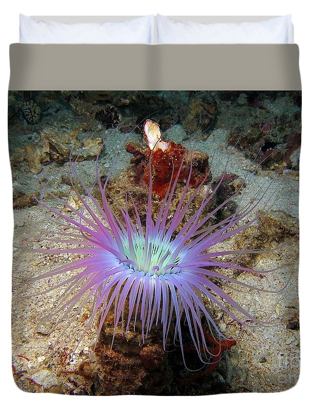 Dangerous Duvet Cover featuring the photograph Dangerous Underwater Flower by Sergey Lukashin