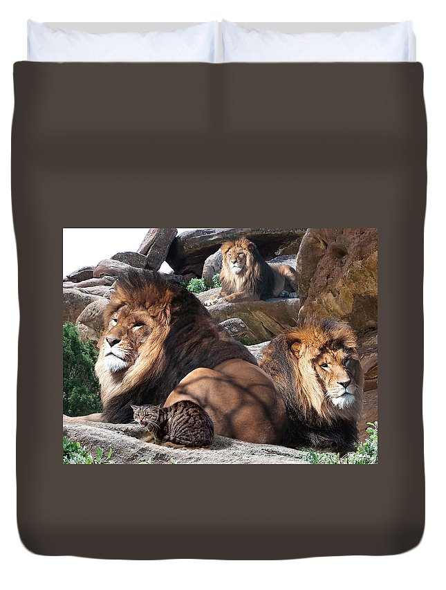 Lions Duvet Cover featuring the mixed media Daniel In The Lion by Bill Stephens