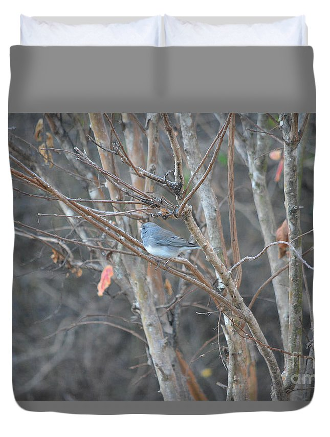 Dark Eyed Junco Perched On Tree Limb Prints Duvet Cover featuring the photograph Dark Eyed Junco Perched On Tree Limb by Ruth Housley
