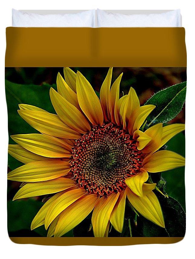 Yellow Sunflower Duvet Cover featuring the photograph Dark Sunflower by Karen McKenzie McAdoo