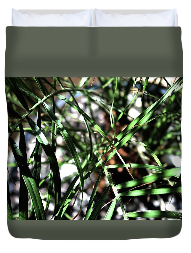 Tree Duvet Cover featuring the photograph Date Palm by Dawn Whiteaker