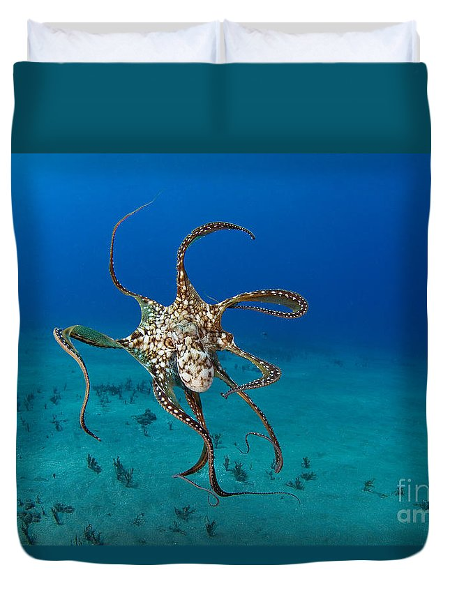 Animal Art Duvet Cover featuring the photograph Day Octopus by Dave Fleetham - Printscapes