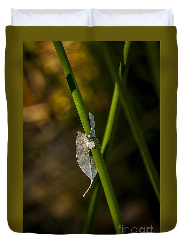 Reeds Duvet Cover featuring the photograph Dead Leaf On Reed by Rich Governali
