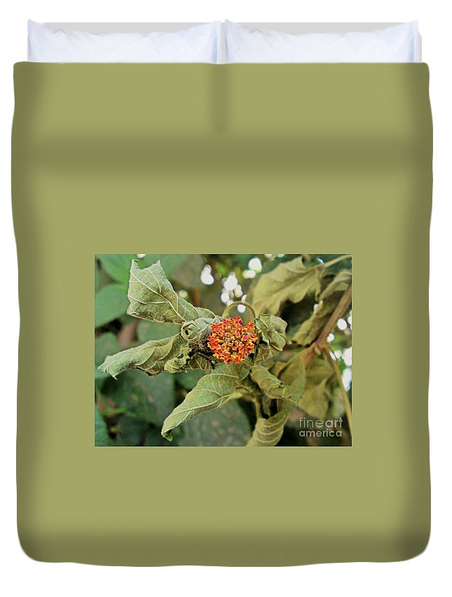 Dead Rose Leaves Green Red Yellow Nature Duvet Cover featuring the photograph Dead Rose by Mina Milad