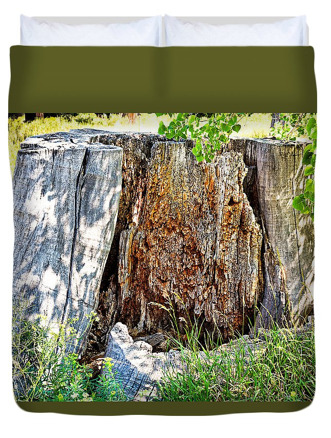 Deadwood Duvet Cover featuring the photograph Deadwood On Cherry Creek Trail 3 by Robert Meyers-Lussier