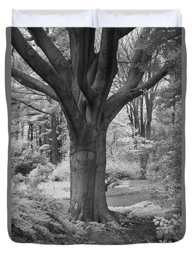 Deciduous Duvet Cover featuring the photograph Deciduous Tree Ir by Bob Neiman